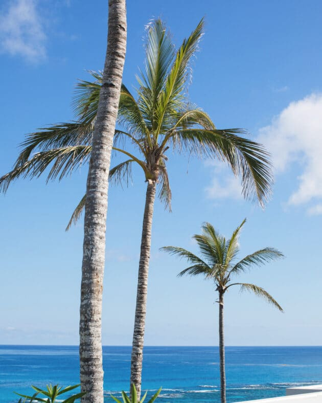 Palm trees overlooking the ocean.