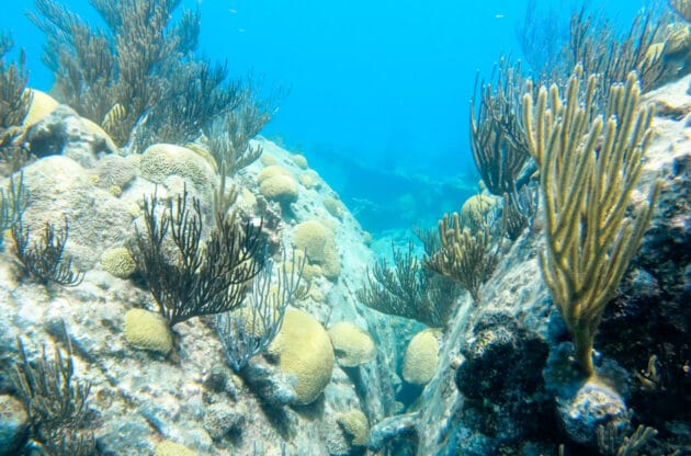 An underwater coral reef with plants.